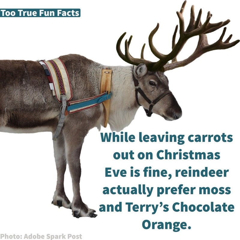 Reindeer - Too True Fun Facts While leaving carrots out on Christmas Eve is fine, reindeer actually prefer moss and Terry's Chocolate Orange. Photo: Adobe Spark Post