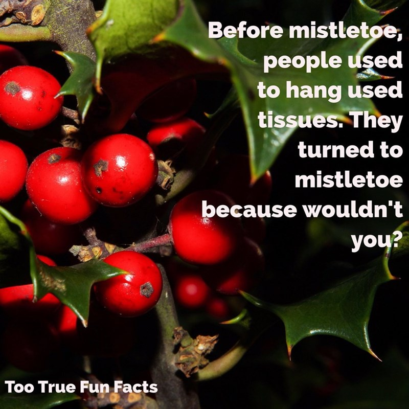 Natural foods - Before mistletoe, people used to hang used tissues. They turned to mistletoe because wouldn't you? Too True Fun Facts