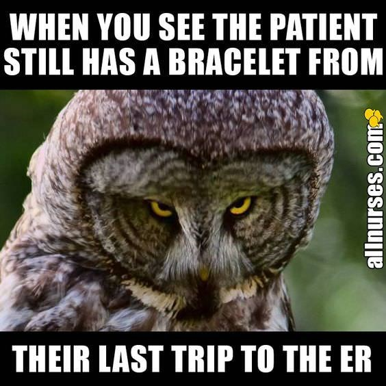 Owl - WHEN YOU SEE THE PATIENT STILL HAS A BRACELET FROM THEIR LAST TRIP TO THE ER allnurses.com