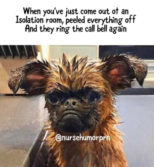 Dog - When you've just come out of an Isolation room, peeled everything off And they ring the call bell agāîn @nursehumorprn