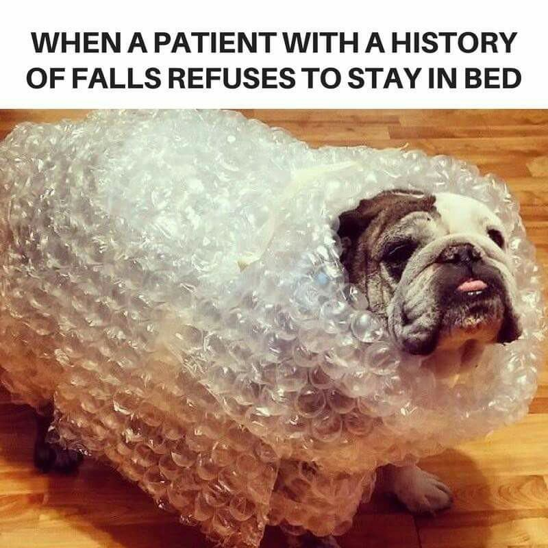Dog - WHEN A PATIENT WITHAHISTORY OF FALLS REFUSES TO STAY IN BED