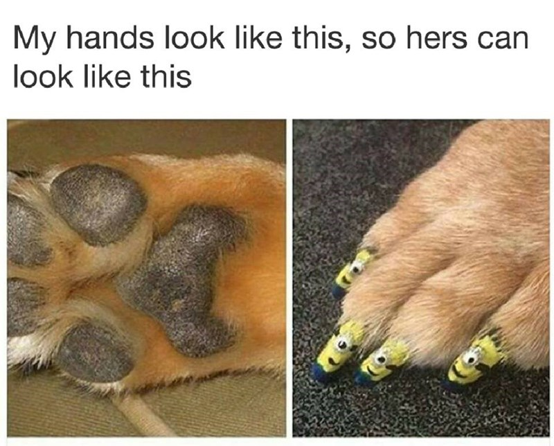 Funny meme about dogs, my hands look like this so hers can look like this.