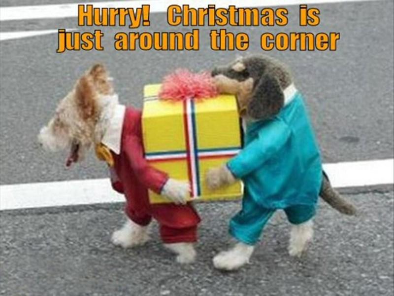 meme - Dog - Hurry! Christmas is just around the corner