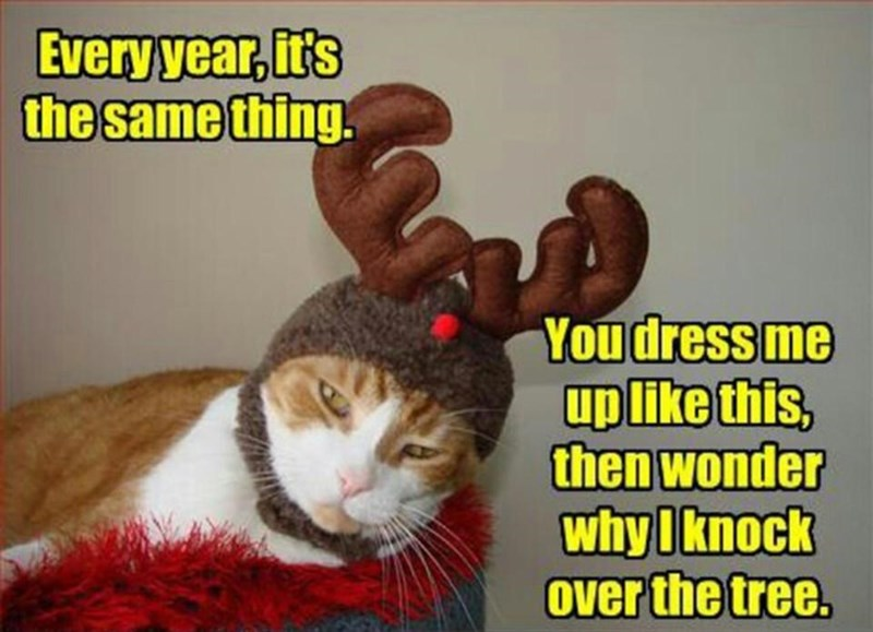 meme - Cat - Every year, ir's the same thing. You dress me up like this, then wonder why Iknock Over the tree.