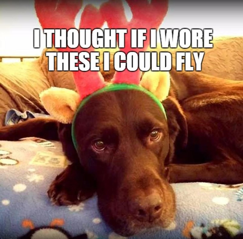 meme - Dog - OTHOUGHT IFIWORE THESEI COULD FLY