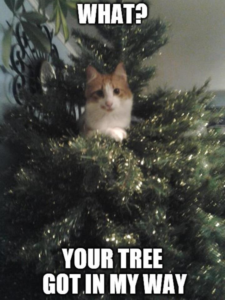 meme - Cat - WHAT? YOUR TREE GOT IN MY WAY
