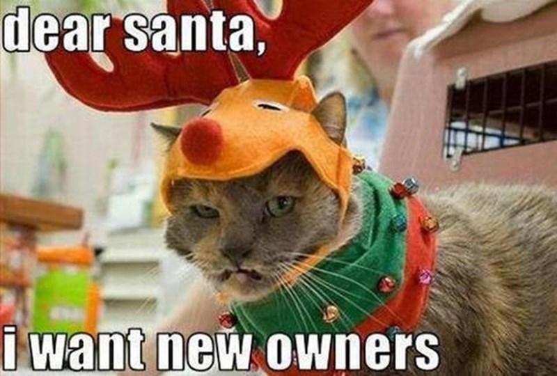 meme - Photo caption - dear santa, i want new owners