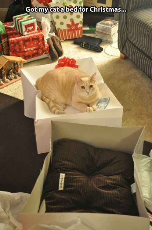 meme - Cat - Gotmy catabedfor Christmas.. etvpoe