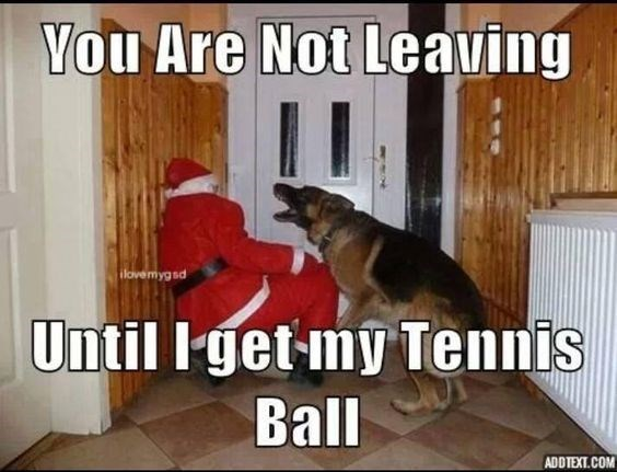 meme - Photo caption - You Are Not Leaving ilovemygsd Until Iget-my Tennis Bal ADDTEXT.COM