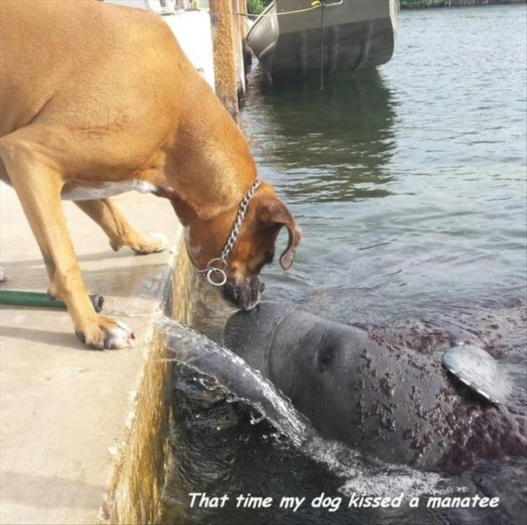 Water - That time my dog kissed a manatee