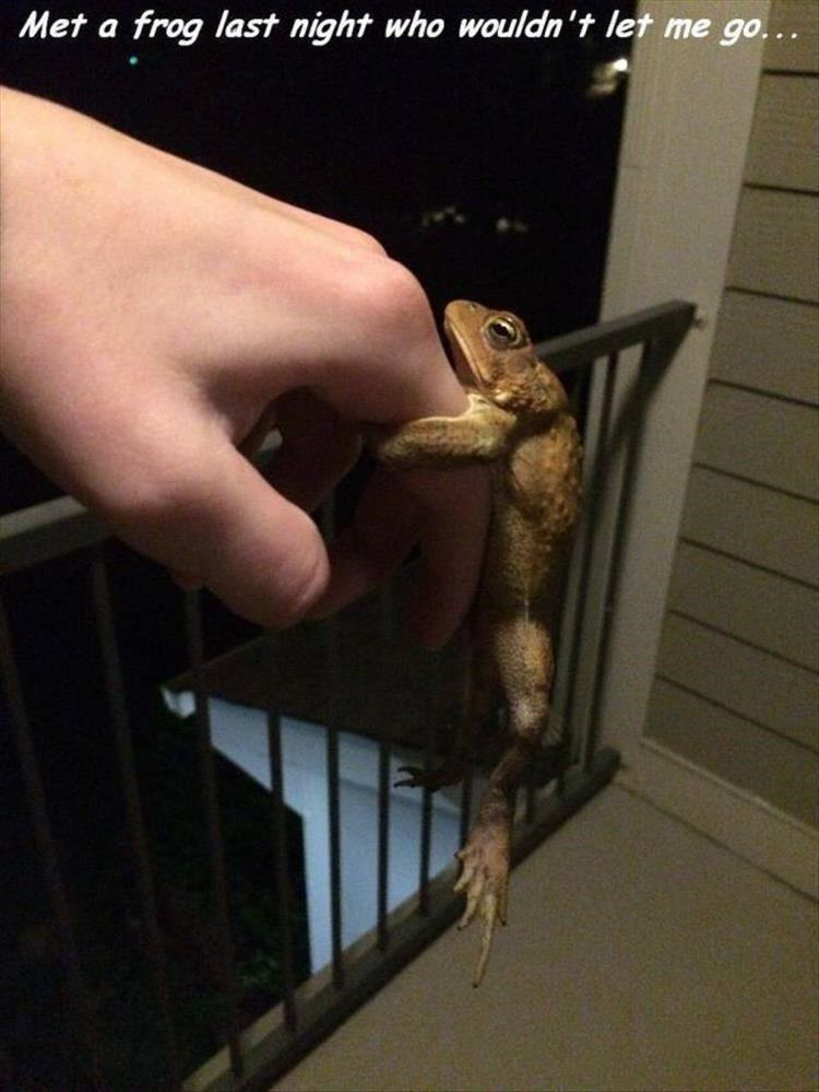 Hand - Met a frog last night who wouldn't let me go...