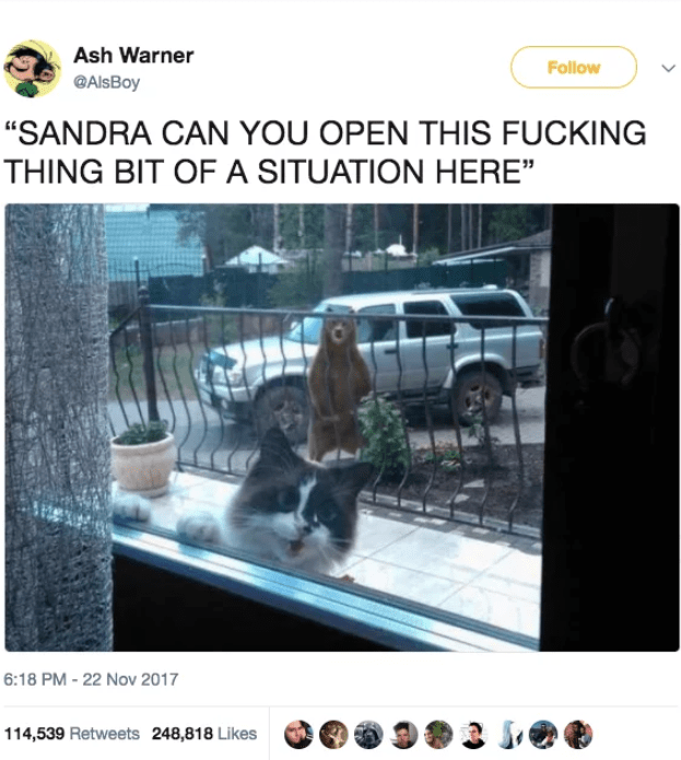 """cat twitter - Photo caption - Ash Warner Follow GAlsBoy """"SANDRA CAN YOU OPEN THIS FUCKING THING BIT OF A SITUATION HERE 6:18 PM -22 Nov 2017 114,539 Retweets 248,818 Likes"""
