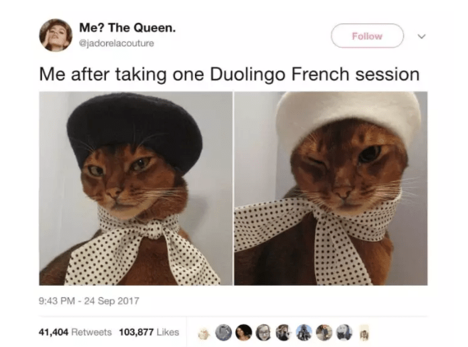 cat twitter - Cat - Me? The Queen Follow @jadorelacouture Me after taking one Duolingo French session 9:43 PM - 24 Sep 2017 41,404 Retweets 103,877 Likes
