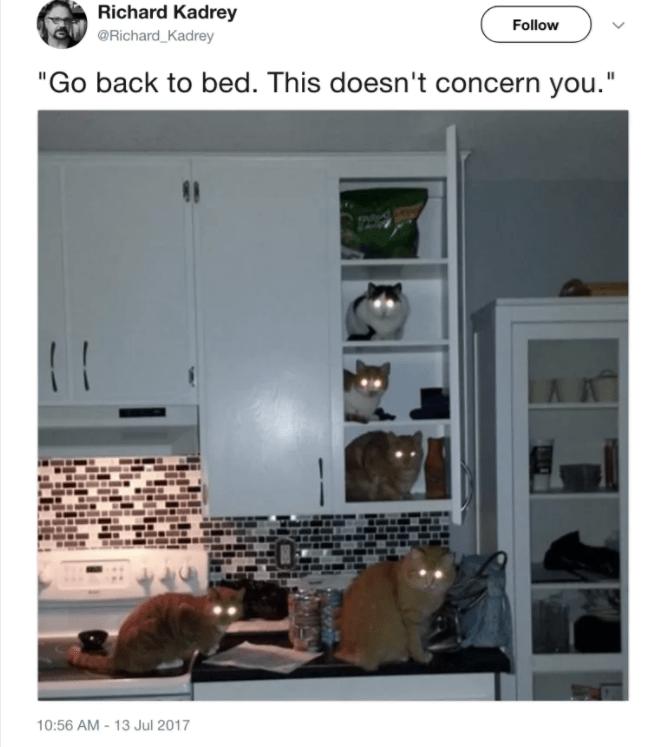 "cat twitter - Property - Richard Kadrey Follow @Richard_Kadrey ""Go back to bed. This doesn't concern you."" 10:56 AM -13 Jul 2017"