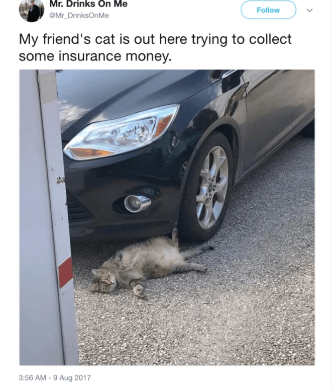 cat twitter - White - Mr. Drinks On Me Follow @Mr DrinksOnMe My friend's cat is out here trying to collect some insurance money. 3:56 AM -9 Aug 2017
