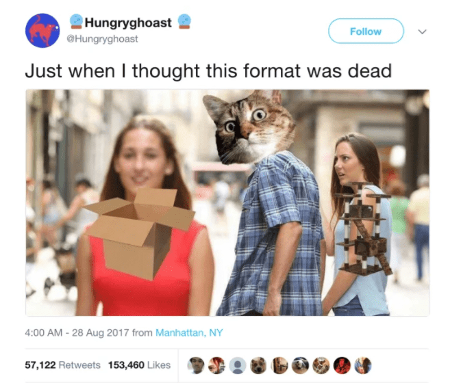 cat twitter - Product - Hungryghoast Follow @Hungryghoast Just when I thought this format was dead 4:00 AM -28 Aug 2017 from Manhattan, NY 57,122 Retweets 153,460 Likes