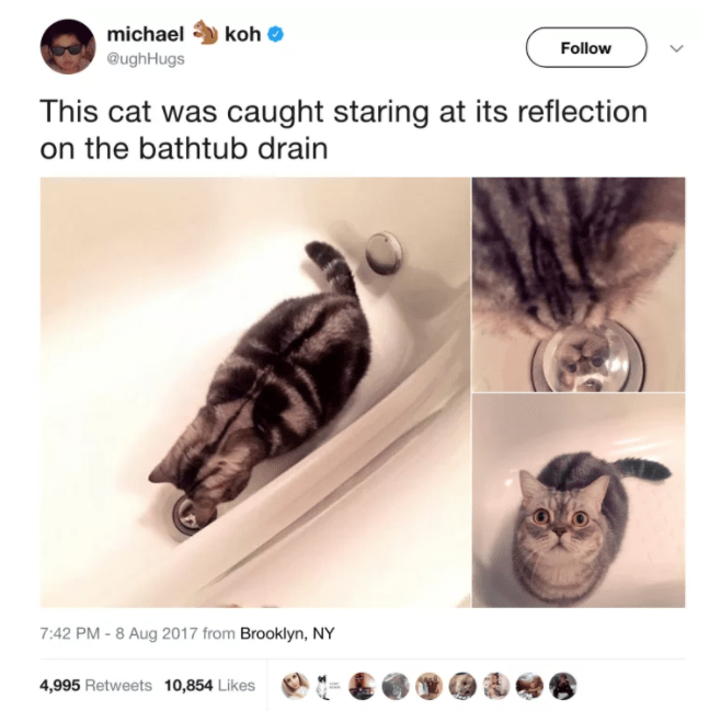 cat twitter - Font - michael koh Follow @ughHugs This cat was caught staring at its reflection on the bathtub drain 7:42 PM -8 Aug 2017 from Brooklyn, NY 4,995 Retweets 10,854 Likes