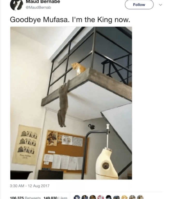 cat twitter - Property - Maud Bernabe Follow @MaudBernab Goodbye Mufasa. I'm the King now. 3:30 AM -12 Aug 2017 106.375 Retweets 149.830 Likes
