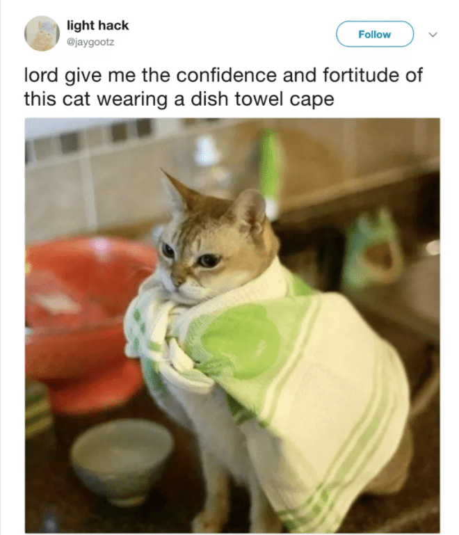 cat twitter - Cat - light hack Follow @jaygootz lord give me the confidence and fortitude of this cat wearing a dish towel cape
