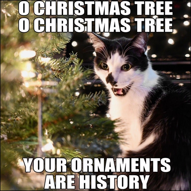 a carol of a cat singing about christmas