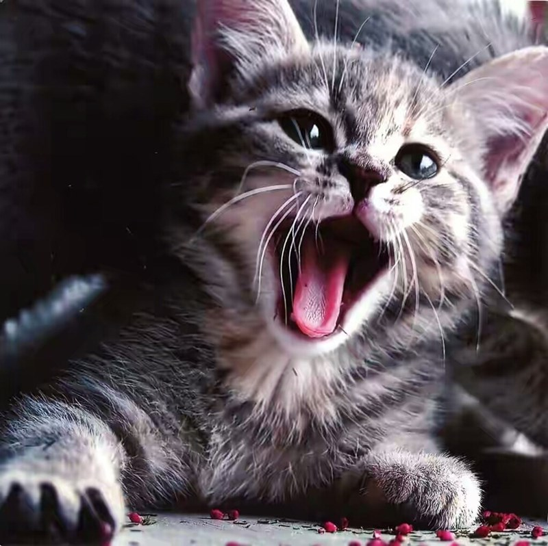 grey kitten with its mouth open as if it's smiling widely