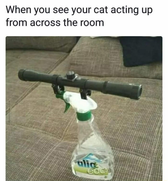 meme - Gun - When you see your cat acting up from across the room alic eco