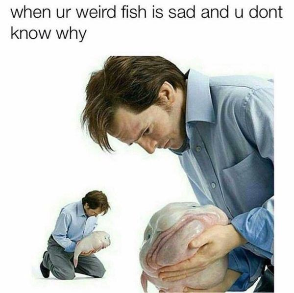 meme - Child - when ur weird fish is sad and u dont know why