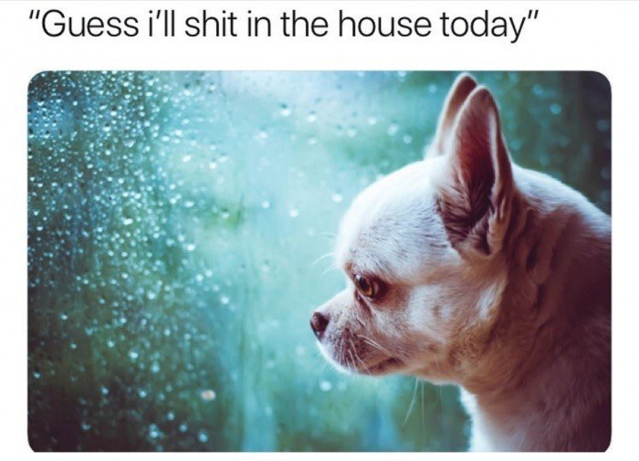 """meme - Canidae - """"Guess i'll shit in the house today"""""""