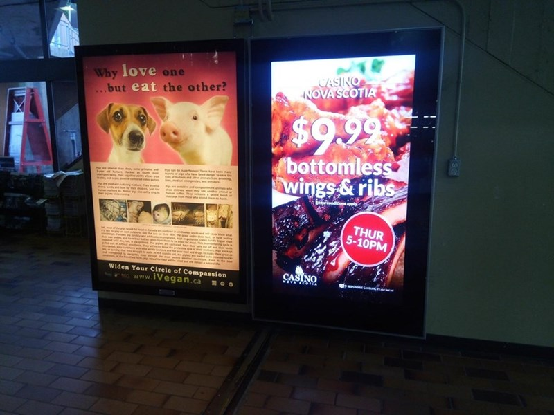 ad for open buffet at meat restaurant next to ad about veganism