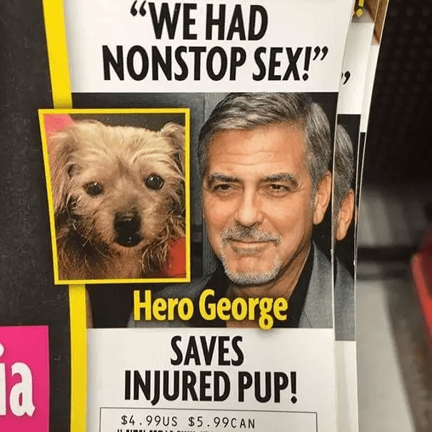 headline about having sex above feature showing George Clooney next to a dog