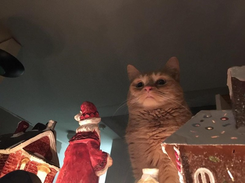 Funny meme about cat that doesn't like christmas.