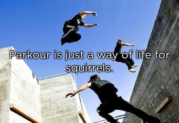 Skateboarder - Parkour is just a way of life for squirrels.
