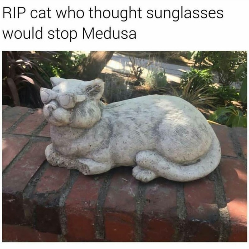 funny meme about a cat getting turned to stone by medusa.