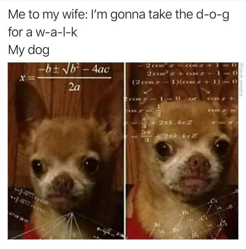 Funny meme about dogs.