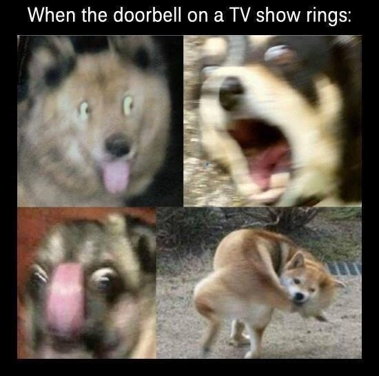 Funny meme about dogs and doorbells.