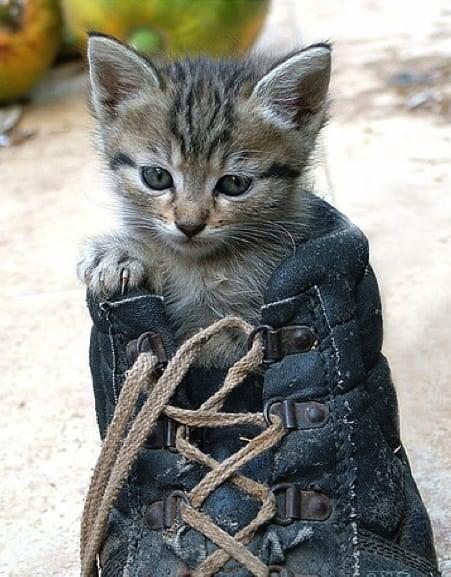 cute animal - Cat