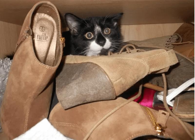 cute animal - Cat - ruffe