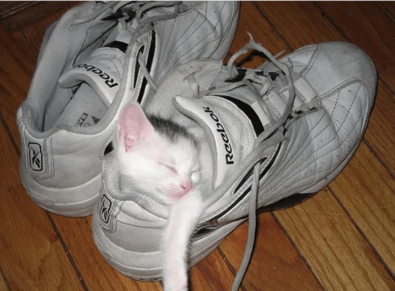 cute animal - Footwear - DA