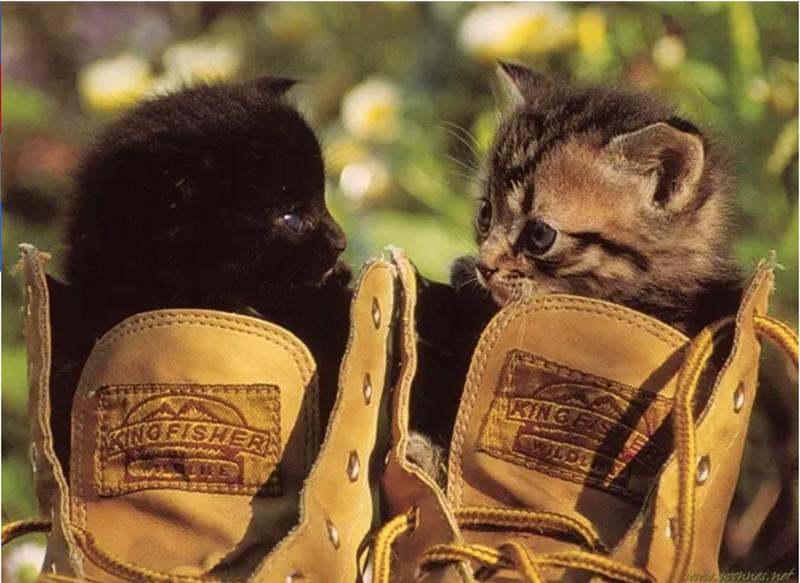 cute animal - Cat - KING NG BISHERN sts nEs, net