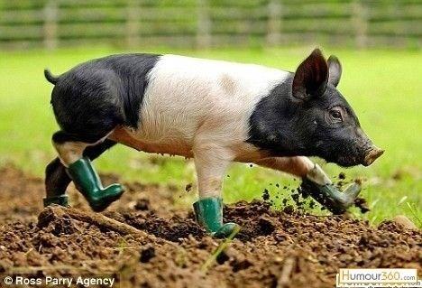 cute animal - Mammal - Humour360.com om Ross Parry Agency