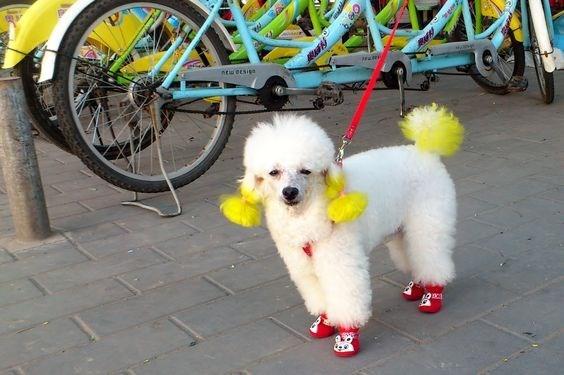 cute animal - Dog - ntu eesise