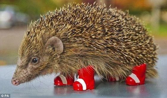 cute animal - Erinaceidae - OPA