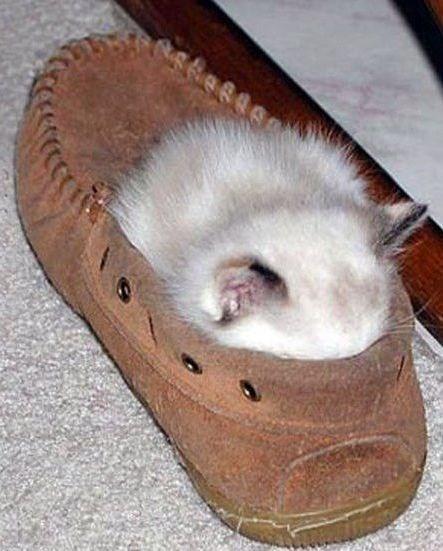 cute animal - Footwear