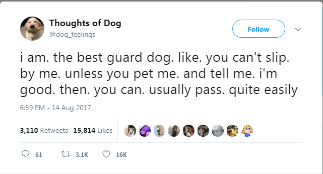 dog tweet - Text - Thoughts of Dog Follow @dog_feelings i am. the best guard dog. like. you can't slip. by me. unless you pet me. and tell me. i'm good. then. you can. usually pass. quite easily 6:59 PM -14 Aug 2017 3,110 Retweets 15,814 Likes t3.1K 61 16K