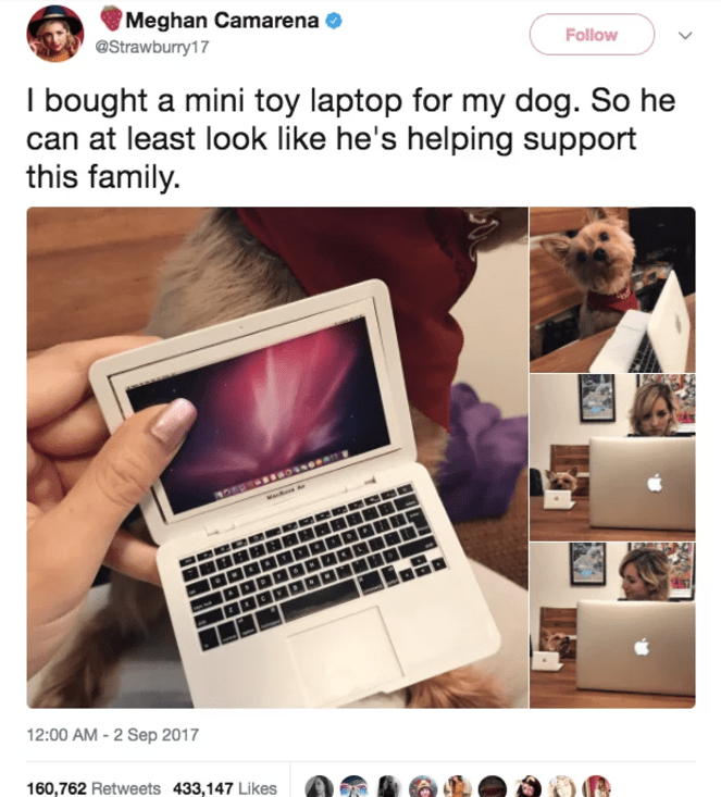 dog tweet - Product - Meghan Camarena Follow @Strawburry17 I bought a mini toy laptop for my dog. So he can at least look like he's helping support this family 12:00 AM -2 Sep 2017 160,762 Retweets 433,147 Likes