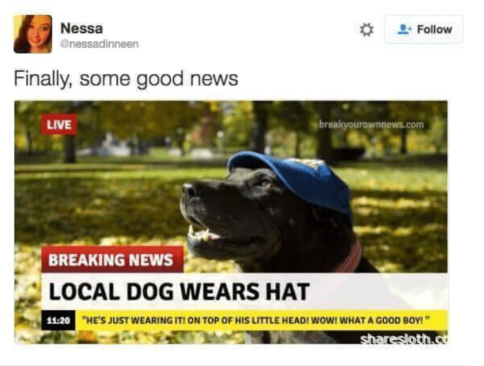 "dog tweet - Canidae - Nessa Follow @nessadinneen Finally, some good news breakyourownnews.com LIVE BREAKING NEWS LOCAL DOG WEARS HAT 11:20 ""HE'S JUST WEARING IT! ON TOP OF HIS LITTLE HEAD! WOw! WHAT A GOOD BOY! "" sharesloth.c"