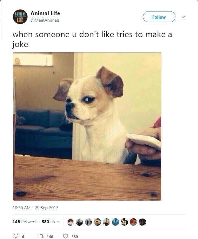 dog tweet - Vertebrate - ANTRAL Animal Life LIFE @MeetAnimals Follow when someone u don't like tries to make a joke 10:30 AM 29 Sep 2017 146 Retweets 580 Likes t 146 580