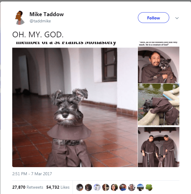 "dog tweet - Miniature schnauzer - Mike Taddow Follow @taddmike OH. MY. GOD. nere, au ot ne oreeners reve mm very much He is a creature of God"" Ктатсрпотат стртJ IC D Tо тaлшаш 2:51 PM -7 Mar 2017 27,870 Retweets 54,732 Likes"