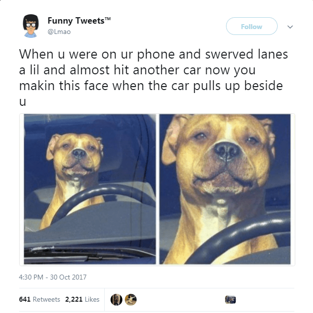dog tweet - Dog - Funny TweetsTM Follow @Lmao When u were on ur phone and swerved lanes a lil and almost hit another car now you makin this face when the car pulls up beside u 4:30 PM -30 Oct 2017 641 Retweets 2,221 Likes