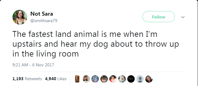dog tweet - Text - Not Sara Follow @smithsara79 The fastest land animal is me when I'm upstairs and hear my dog about to throw up in the living room 9:21 AM - 6 Nov 2017 1,193 Retweets 4,940 Likes